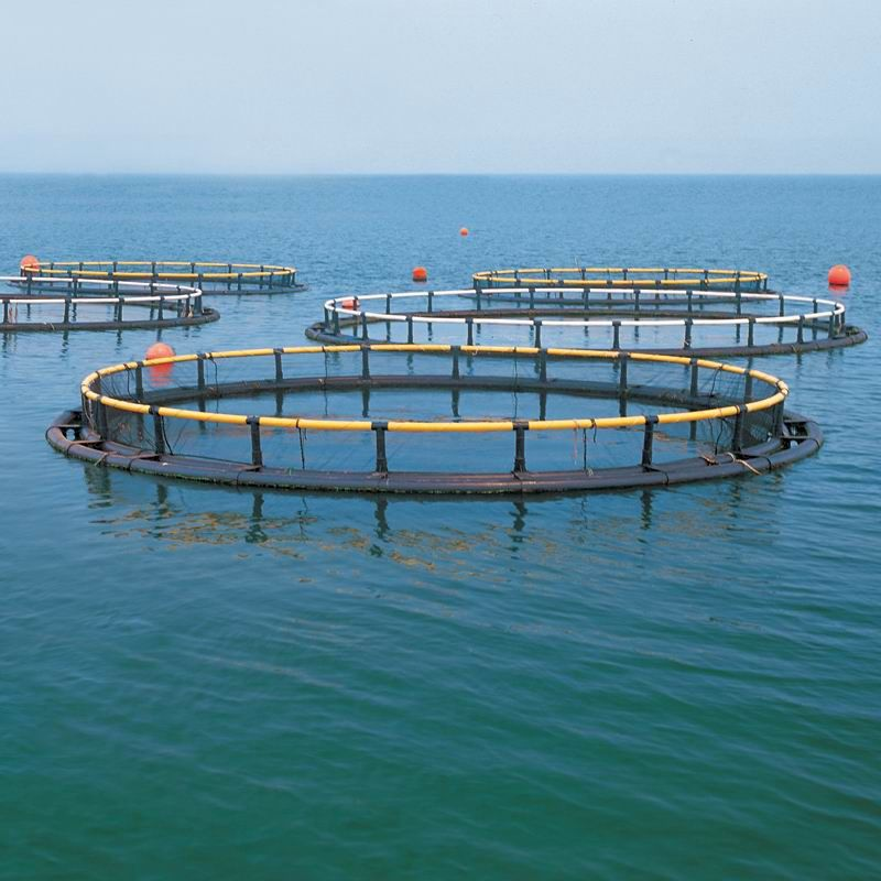 Ozone Application in Aquaculture